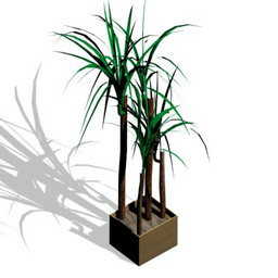 Palm Flowers 3D Models | Free Download 3D Models | Free 3d models